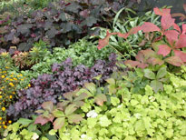 Heuchera-mix-3